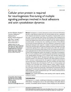 Cellular prion protein is required for neuritogenesis: fine ... - CiteSeerX