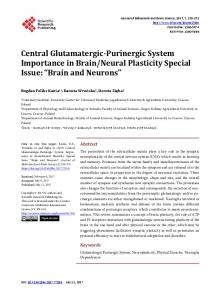 Central Glutamatergic-Purinergic System