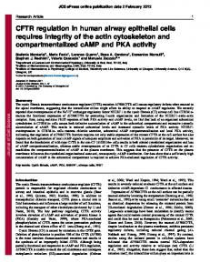 CFTR regulation in human airway epithelial cells requires integrity of ...