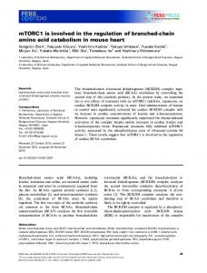 chain amino acid catabolism in mouse heart - Wiley Online Library