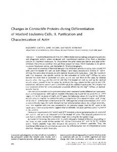 Changes in Contractile Proteins during Differentiation ... - BioMedSearch
