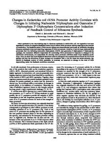 Changes in Escherichia coli rRNA Promoter Activity Correlate with ...