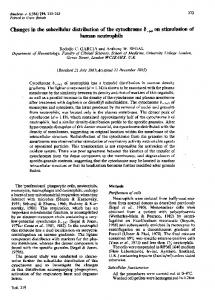 Changes in the subcellular distribution of the cytochrome b-245 on ...