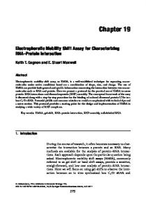 Chapter 19 Electrophoretic Mobility Shift Assay for Characterizing