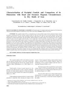 Characterization of Occipital Condyle and