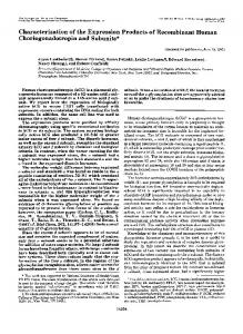 Characterization of the expression products of recombinant human ...