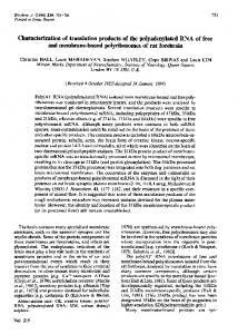 Characterization of translation products of the polyadenylated RNA of ...