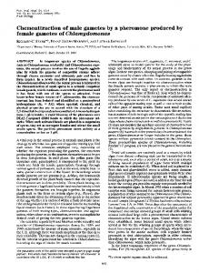 Chemoattraction of male gametes by a pheromone produced by ...