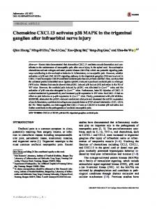 Chemokine CXCL13 activates p38 MAPK in the ...