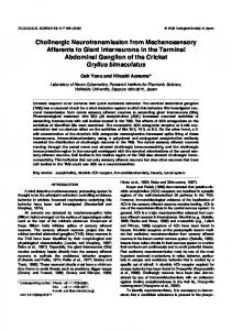 Cholinergic Neurotransmission from Mechanosensory ... - BioOne