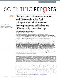 Chromatin architecture changes and DNA replication fork collapse are