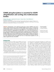 CIN85 phosphorylation is essential for EGFR ... - BioMedSearch