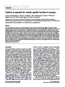 Clathrin is essential for meiotic spindle function in oocytes