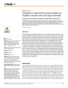 Claudin5a is required for proper inflation of Kupffer's vesicle lumen ...