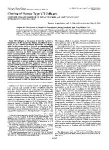 Cloning of Human Type VI1 Collagen - The Journal of Biological ...