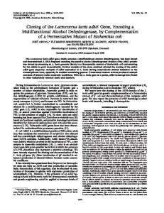 Cloning of the Lactococcus lactis adhE Gene, Encoding a ...