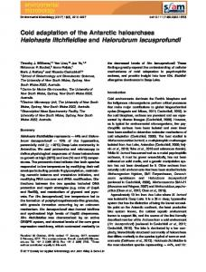 Cold adaptation of the Antarctic haloarchaea