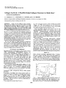 Collagen Synthesis: A Disulfide-Linked Collagen Precursor in Chick ...