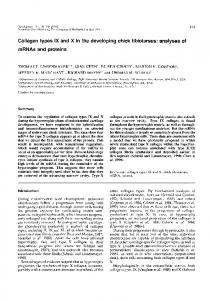 Collagen types IX and X in the developing chick ... - Development