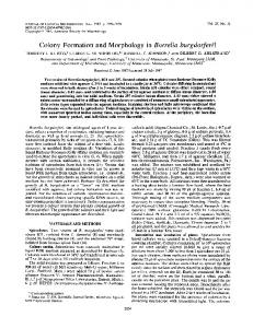 Colony Formation and Morphology in Borrelia burgdorferit