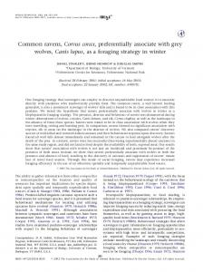 Common ravens, Corvus corax, preferentially associate with grey ...