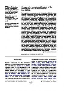 Comparative morphometric study of the