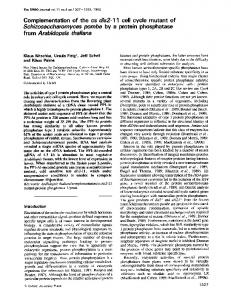 Complementation of the cs dis2-1 1 cell cycle mutant of ... - Europe PMC