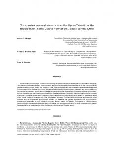 Conchostracans and insects from the Upper Triassic of the ... - CiteSeerX