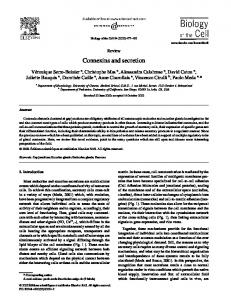 Connexins and secretion - Wiley Online Library