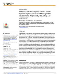 Constitutive metanephric mesenchyme-specific expression of ... - PLOS