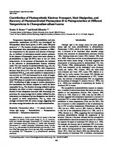 Contribution of Photosynthetic Electron Transport, Heat Dissipation ...