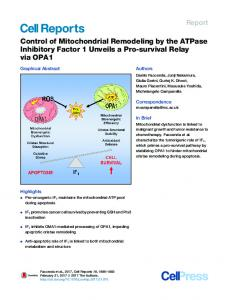 Control of Mitochondrial Remodeling by the ATPase ... - Cell Press