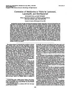 Conversion of Methionine to Thiols by Lactococci, Lactobacilli, and