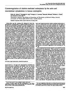 Counterregulation of clathrin-mediated endocytosis by the actin and ...
