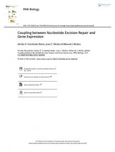 Coupling between Nucleotide Excision Repair and ...