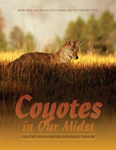 Coyotes in Our Midst