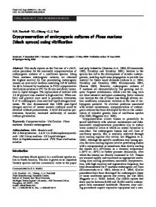 Cryopreservation of embryogenic cultures of Picea mariana (black