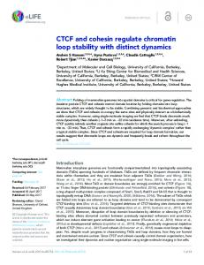 CTCF and cohesin regulate chromatin loop