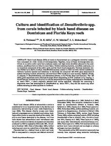 Culture and identification of Desulfovibrio spp. from corals infected by ...