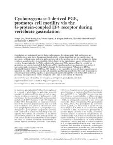 Cyclooxygenase-1-derived PGE2 promotes cell motility via the G ...