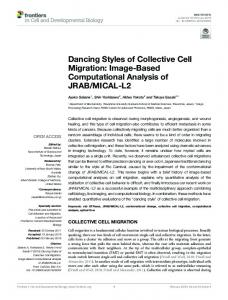 Dancing Styles of Collective Cell Migration: Image