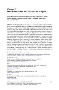 Date Palm Status and Perspective in Spain - Springer Link