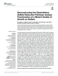 Deconstructing the Dissimilatory Sulfate Reduction Pathway: Isotope
