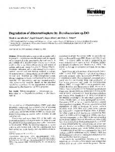 Degradation of dibenzothiophene by Brevibacterium sp. DO