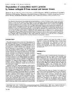 Degradation of extracellular-matrix proteins by human cathepsin B ...