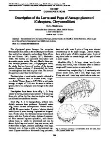 Description of the Larva and Pupa of Parnops glasunovi ... - CiteSeerX