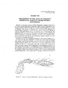 Description of the Male Ceranisus Americensis (Girault) (Hymenoptera ...