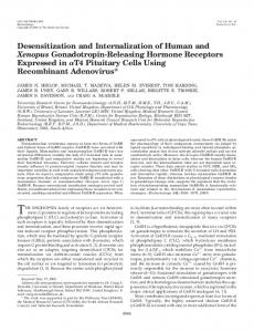 Desensitization and Internalization of Human and Xenopus ...