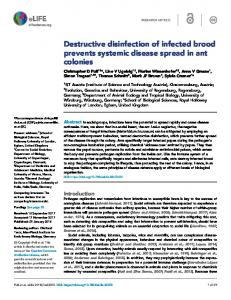 Destructive disinfection of infected brood prevents ... - Semantic Scholar
