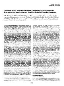 Detection and Characterization of ,&Adrenergic Receptors and ...